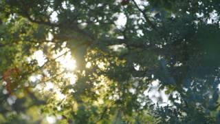 Erfahren Sie eindrucksvoll, wie sich WeberHaus vom Ein-Mann-Zimmereibetrieb zu einem der erfolgreichsten deutschen Fertighaushersteller entwickelt hat. Firmengründer Hans Weber gewährt einen Einblick in die Geschichte von WeberHaus, die bis heute geprägt ist von Weitblick, Ehrgeiz und stetiger Innovation. Was moderner Hausbau heute und in Zukunft bedeutet erläutert Heidi Weber-Mühleck. Und stets im Fokus des Familienunternehmens: Der respektvolle und verlässliche Umgang miteinander und der Einsatz nachwachsender Rohstoffe. Aus Verantortung gegenüber Mensch und Natur. Mitarbeiter erklären, was bei WeberHaus unter freier Planung verstanden wird, wie Ihre Wünsche und Ideen umgesetzt werden und mit welcher Präzision WeberHaus auch Ihr Haus bauen wird. Tauchen Sie ein in die Welt von WeberHaus und erleben, mit welcher Überzeugung wir Nachhaltigkeit leben..