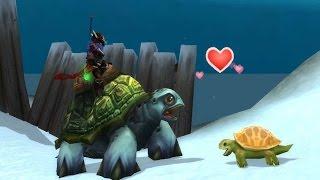Можно ли поймать морскую черепаху в пандарии