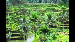 Ubud - Bali | Tempat Wisata Di Indonesia