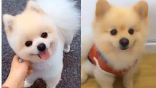 Meilleures Vidéos Drôles de Chat et de Chien 🐶🐱- Best Funny DOGS et CATS #167