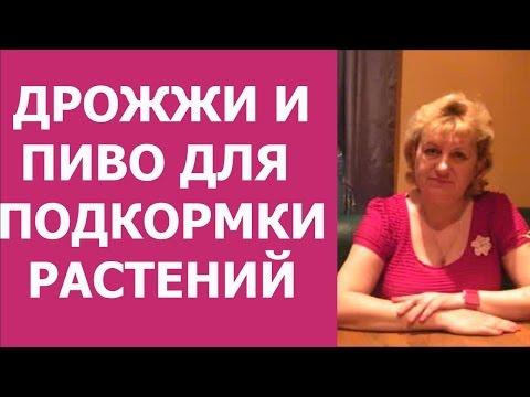 Лечение аденомы простаты санаторий