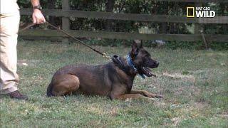 Cesar Millan's New Dog Training Adventure