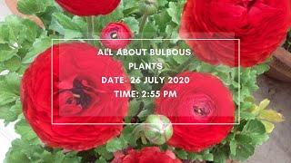 Bulbous Plants - Part 1