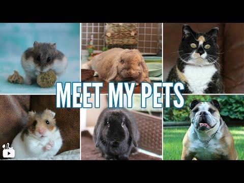 MEET MY 6 PETS