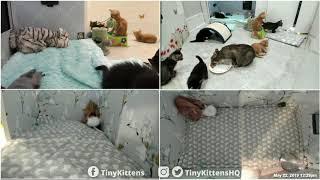 Clover v. Ratty - TinyKittens.com