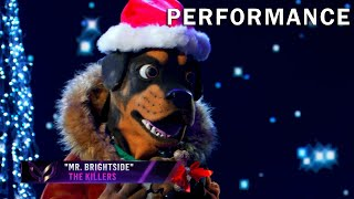 "Rottweiler sings ""Mr. Brightside"" by The Killers 