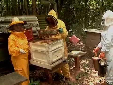 Software para apicultura