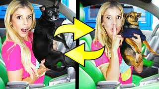 Twin Swap DRIVE THRU Challenge with our Dogs!
