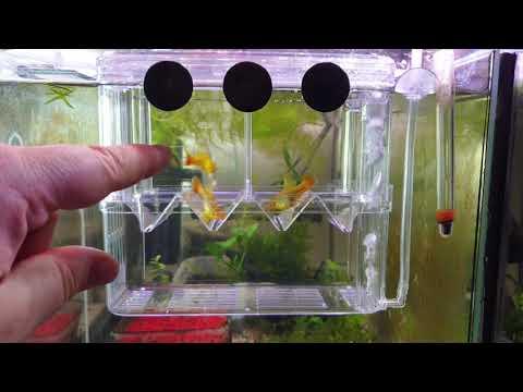 SENZEAL Isolationsbox für Fische im Aquarium Ablaichkasten Unboxing Review Test