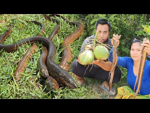 New recipe – finding eel with coconut for cooking & eat – Eating delicious