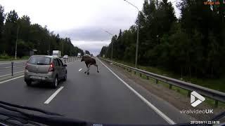 faze tari un elan pe strada