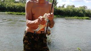 Личинку майского жука для рыбалки на кого ловят