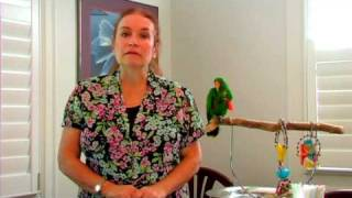 Bird Care : Can Parrots & Parakeets Live Together?