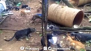 Happy Forest Feral Cats vs. Annoying Cheese Toy - TinyKittens.com