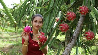 Dragon Fruit In My Homeland It Is Natural Fruit