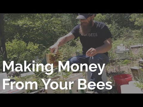, title : 'My Advice To Those Looking To Make Money From Bees