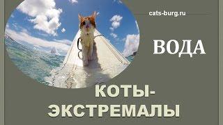 КОТ.ВОДА.ЭКСТРИМ/Cat.Water.Extreme.Complation