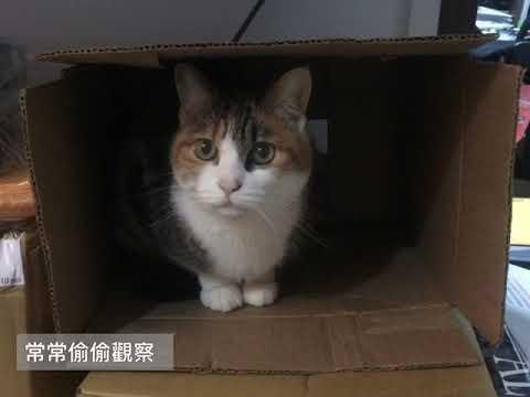 003影片 貓z掰掰
