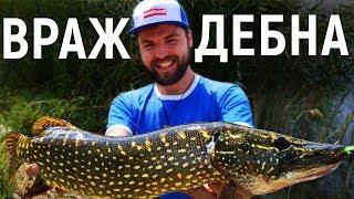 ВРАЖДЕБНА ЩУКА ПО ОБЯД риболов на щука!  / Pike on fiiish black minnow