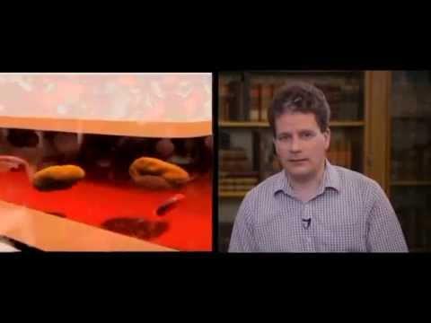 Vastagbélrák genetikai marker