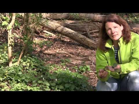 VIDEO - Raus in die Natur - Nadine Eiben