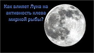 Влияние фаз луны на клев рыбы