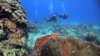 preview picture of video 'Bahamas Dive Packages at Stella Maris Resort'