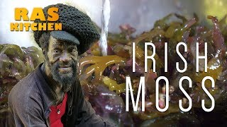 Irish Moss…Seaweed from Jamaica Bob Marley Favourite!