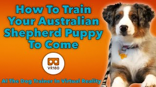 How to Train Your Australian Shepherd Puppy to Come! In VR180!