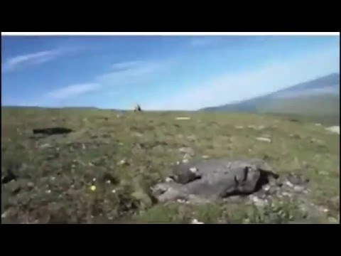 "Massive grizzly charges man on open terrain. Man screams like a beast ""YOU FUCK OFF."" Bear obliges."