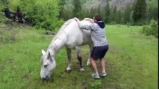 animales quiere montar el caballo