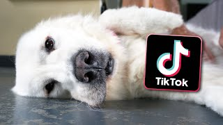 Trying Funny TikTok Trends on Our Dogs!