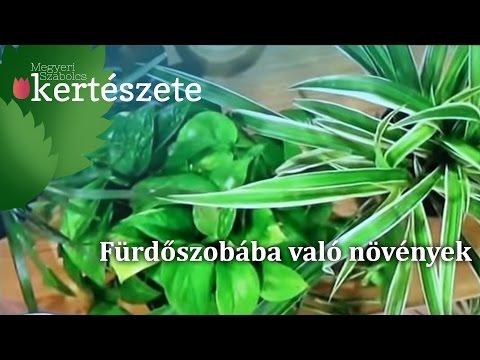 Parazita a szervezetben
