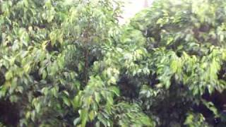 preview picture of video 'Tormenta en Barranqueras'