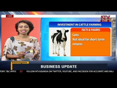 BUSINESS UPDATE: Choosing the best investment option among many
