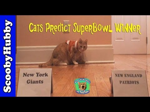 Cats Predict Super Bowl Winner
