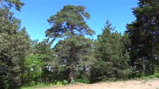 Лес деревья