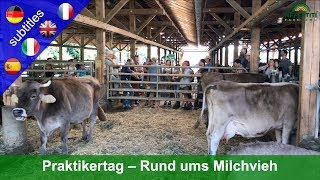 Practitioner's day around dairy cattle at the Rengoldshausen farm
