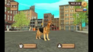 Играем он-лайн в Dog Sim. Симулятор собаки.