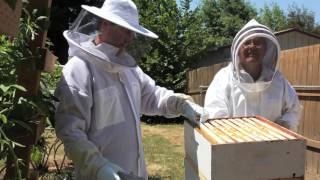 How to buy the right Beekeeping Suit or Jacket