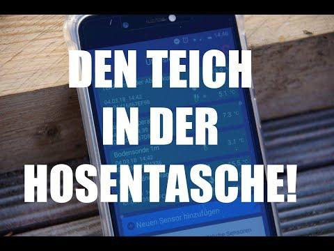 Koiteichblog [31] ★  Temperatur mit dem Smartphone messen