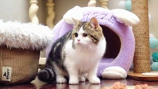 【李喜貓】跟猫妈妈分别四个月后,重逢的瞬间小猫激动得浑身颤抖,看了真叫人心疼