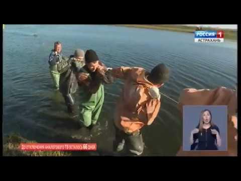 Россельхознадзор провел отбор проб на весеннюю виремию карпов в Астраханской области