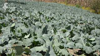 Programa Agropecuario