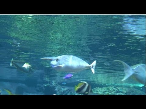 Cherbourg aquarium La Cité de la Mer