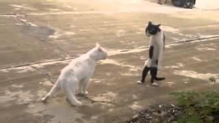 les chats qui me me fait rire