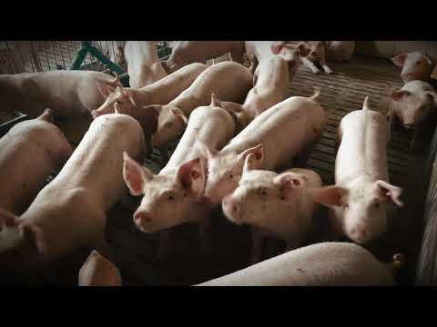 Schwein konventionell - Bodenbeschaffenheit