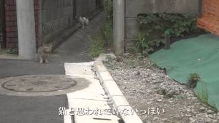 保護した猫が外に出たいと騒ぐので散歩をさせてみた Rescued Cat Tried To Take A Walk