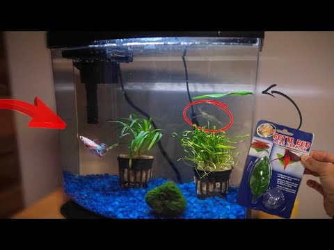 MAJOR BETTA FISH TANK REMODEL!!!