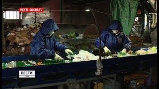 Более 4 тысяч тонн мусора в Сочи вывезено на вторичную переработку